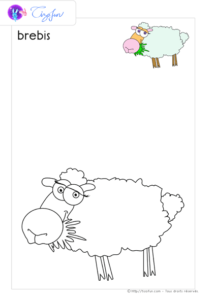 animal-ferme-dessin-a-colorier-brebis-coloriage