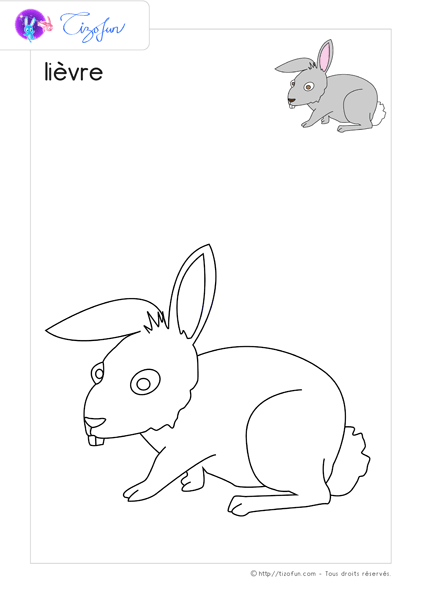 animal-ferme-dessin-a-colorier-lievre-coloriage