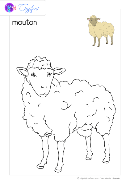 animal-ferme-dessin-a-colorier-mouton-coloriage
