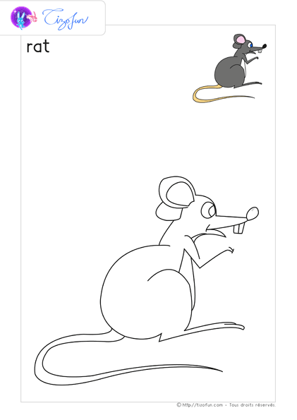 animal-ferme-dessin-a-colorier-rat-coloriage